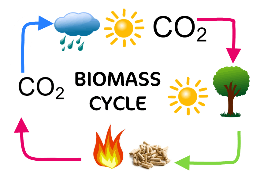 biomass cycle